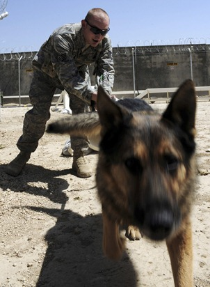 Staff Sgt. Chris Reynolds runs his German shepherd, Baiky, through a training obstacle course Aug. 7 at Bagram Airfield, Afghanistan. Sergeant Reynolds, an eight-year Air Force veteran, is a dog handler with the 455th Expeditionary Security Forces Squadron and is deployed from Vandenberg Air Force Base, Calif. He and his dog patrol the base and inspect mail, luggage and vehicles for narcotics. U.S. Air Force photo Staff Sgt. J.G. Buzanowski - RELEASED.