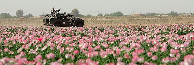 Poppy Fields in Afghanistan Contribute USD $Millions to support the Taliban.